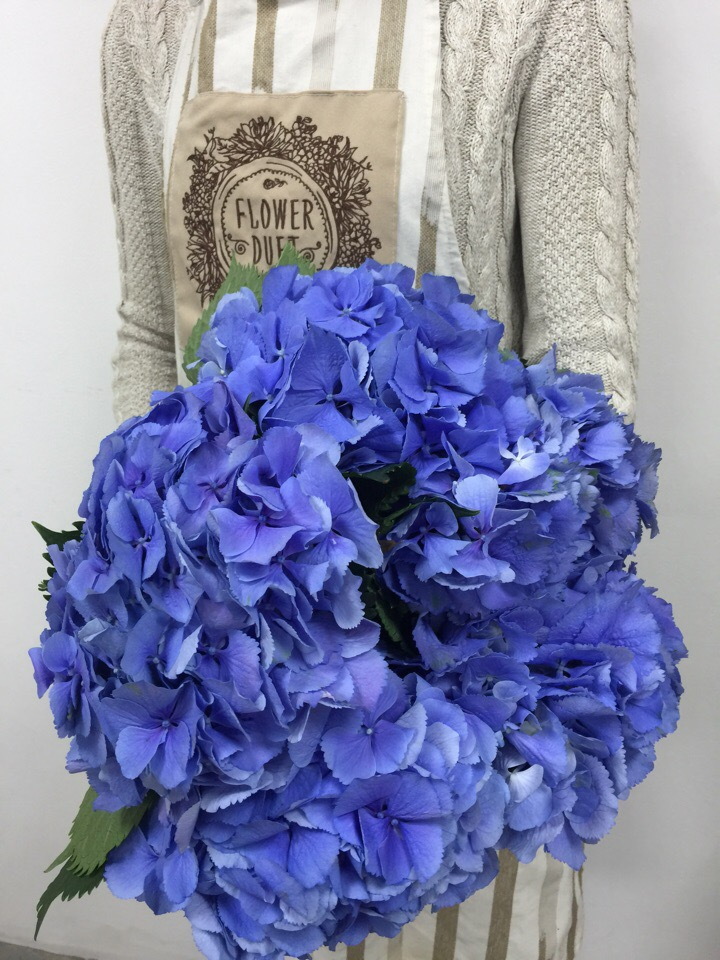 Цветы Гортензия Купить Интернет Магазин